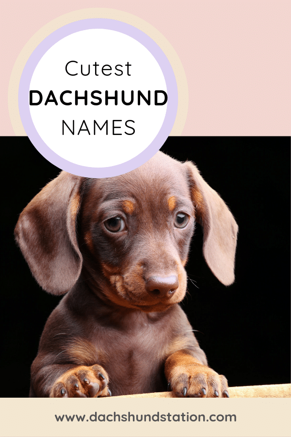 cutest dachshund names