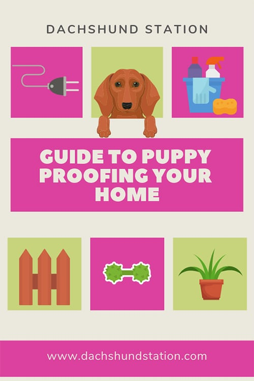 puppy proof your home
