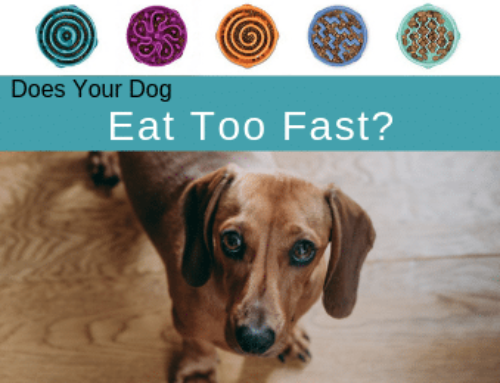 Selecting the Best Slow Feeder Dog Bowls [Dog eats too fast]