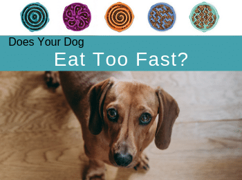 Does Your Dog Eat Too Fast? Slow Feeder Dog Bowls