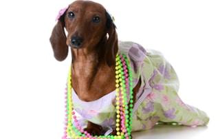 dachshund jewelry gifts