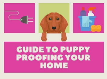 Puppy Proofing Your Home For a Dachshund