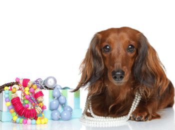Adorable Dachshund Jewelry