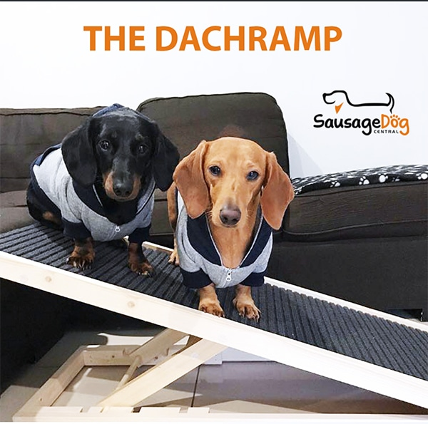 ivdd in dachshunds