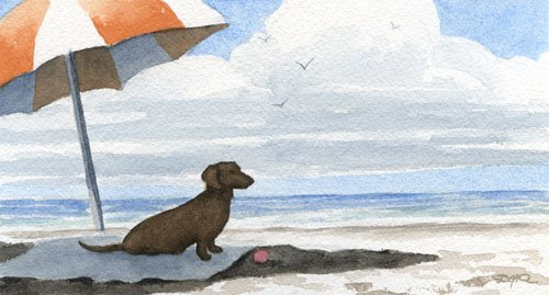 Dachshund Under Umbrella