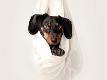 Tick Bites! 8 Scary Facts Every Dachshund Owner Should Know
