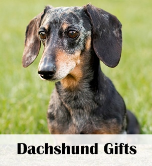 dachshund station