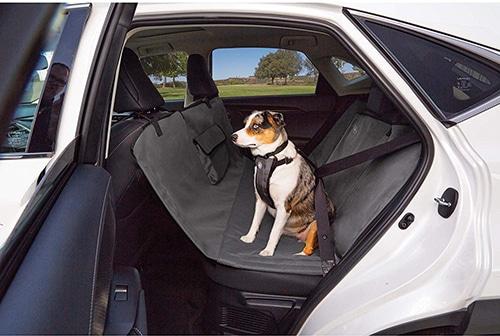 Photo Credit: Sleepypod, dog seat belts