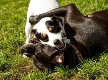 Dangers of dog parks
