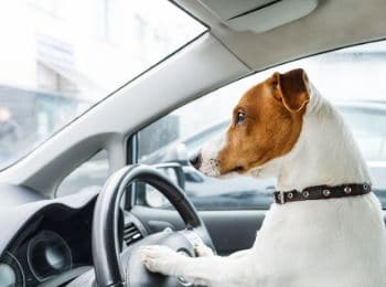 How to Prevent Motion Sickness in Dogs
