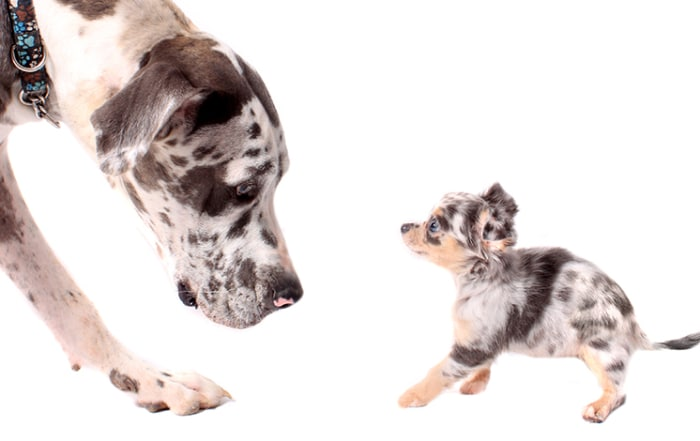how to introduce a new puppy to an older dog
