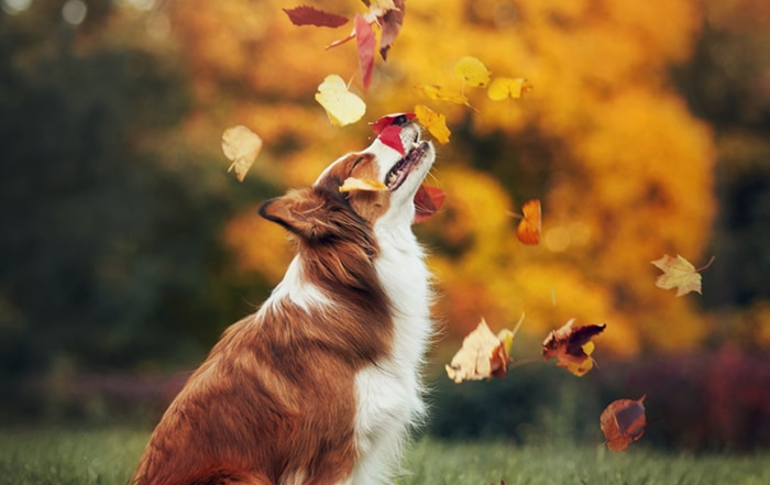 fall games for dogs