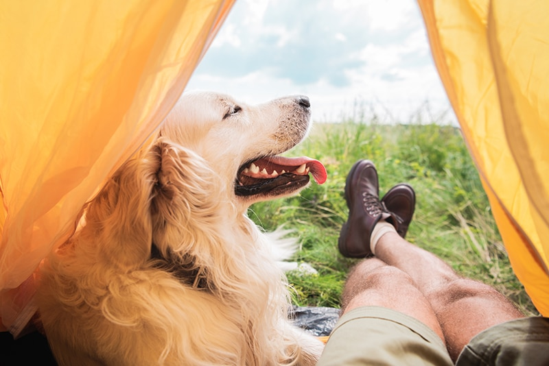 Fun Fall Activities On Your Dog's Bucket List camping with dog