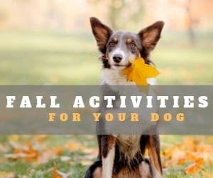 Fall Activities for Dogs