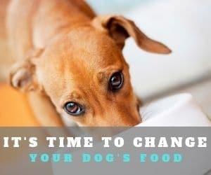 Dog Food Rotation