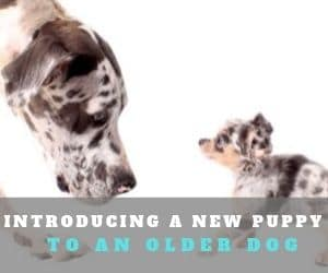 New Puppy & Older Dog?