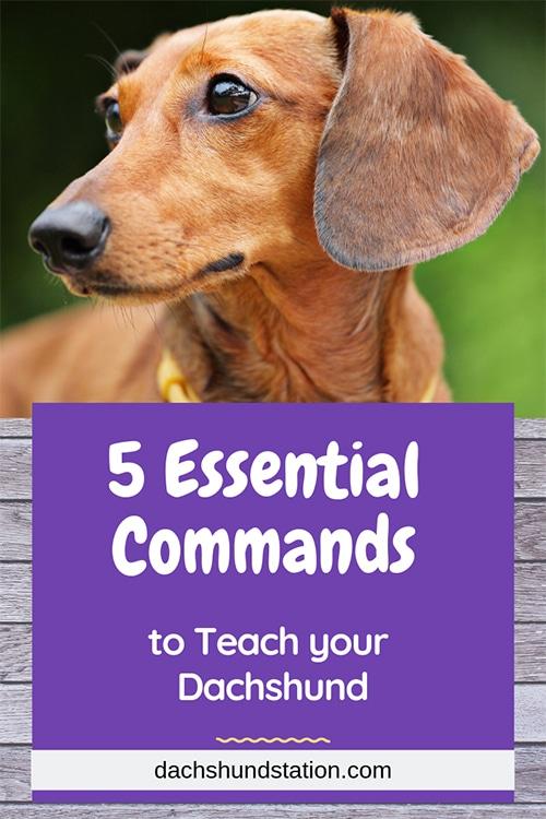 Teach Your Dachshund