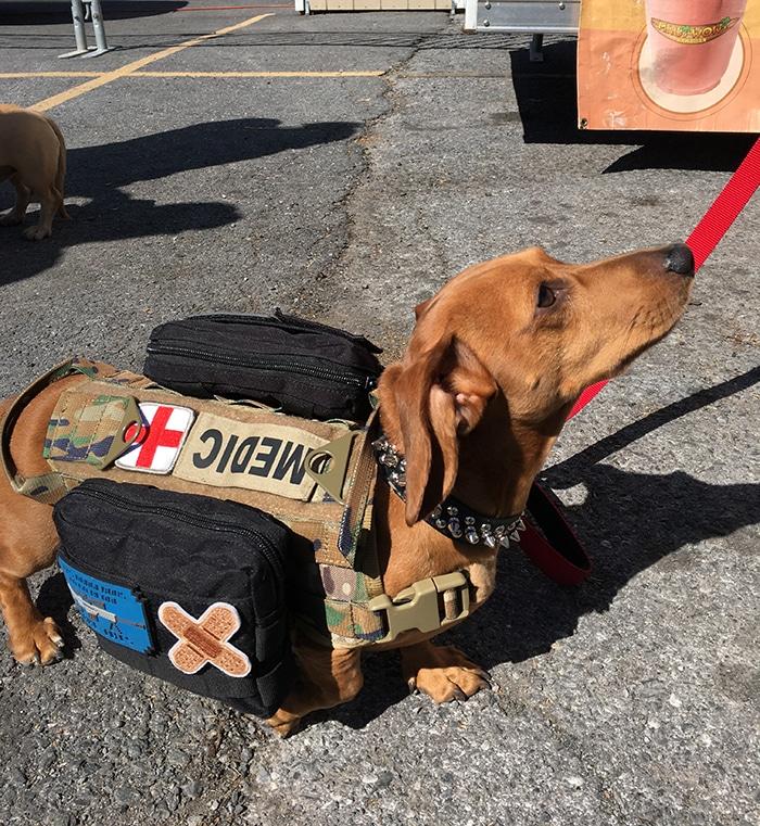 fall festival for dachshunds