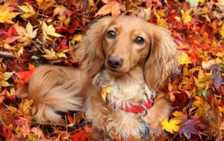 Holiday Gift Guide for Dachshunds 2019 1
