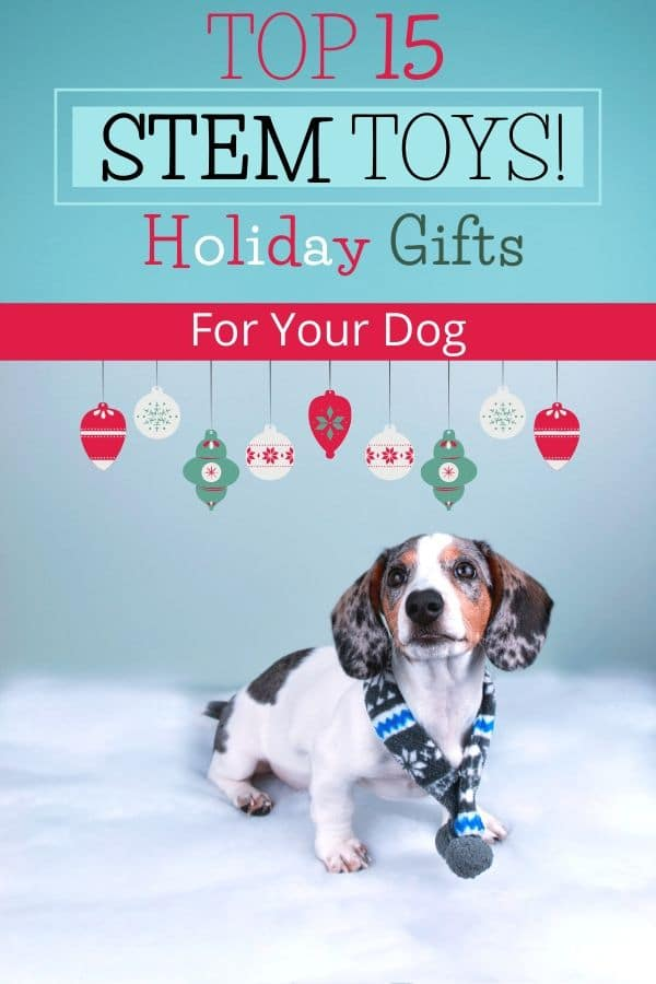 15 Affordable STEM Holiday Gifts For EVERY DOG