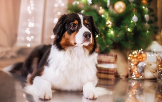 STEM Holiday Gifts for Dogs