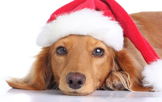 Holiday Gift Guide for Dachshunds 2019