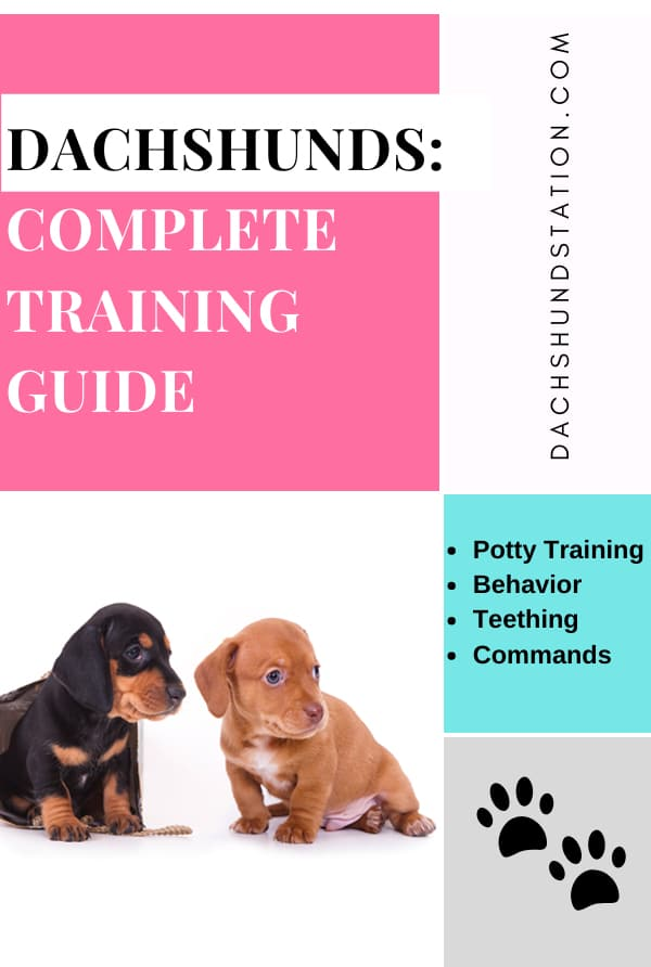 Easy Dachshund Puppy Training