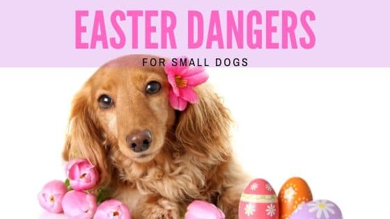Easter Dangers for Small Dogs
