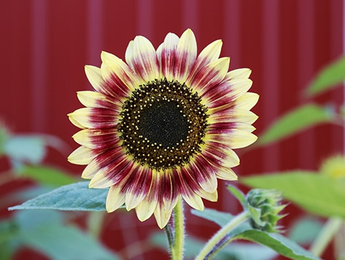Flowers You CAN Plant in A DOG-SAFE Garden