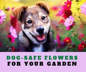 dog safe flowers for garden